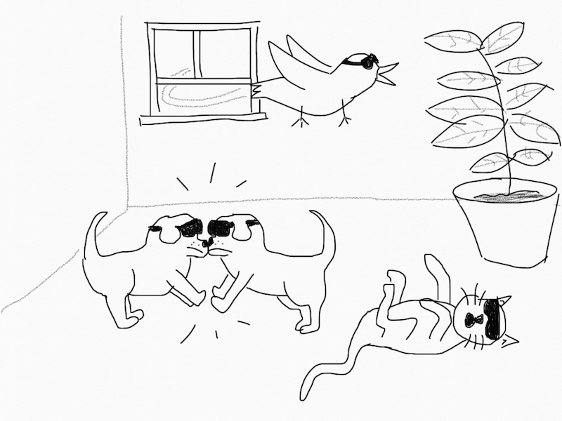 2 dogs, a cat, and a bird playing VR